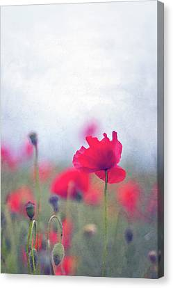 Scarlet Poppies In Painterly Style Canvas Print by Image by Catherine MacBride