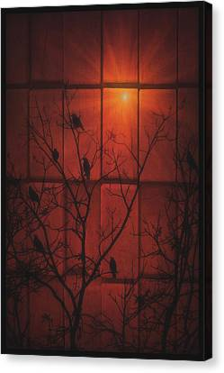 Scarlet Silhouette Canvas Print by Tom York Images
