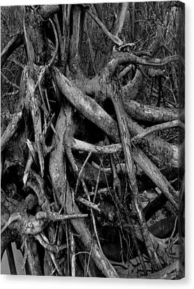 Scary Branches Canvas Print