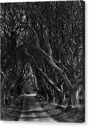 Scary Pathway Canvas Print by David McFarland