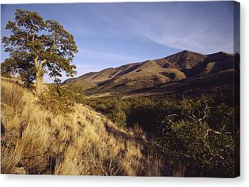 Scenic View Of The Yakima Valley Canvas Print by Sisse Brimberg