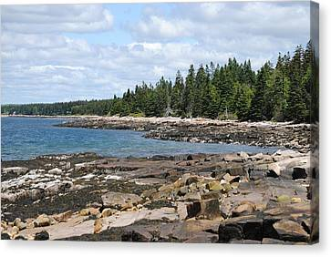 Schoodic Peninsula  Canvas Print by Steven Scott