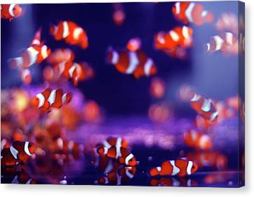 School Of Fish Canvas Print by Yuki Crawford