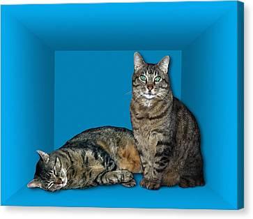 Schrodinger's Cat, Artwork Canvas Print