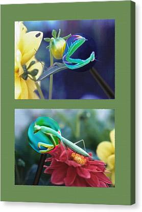 Science Class Diptych 2 - Praying Mantis Canvas Print by Steve Ohlsen