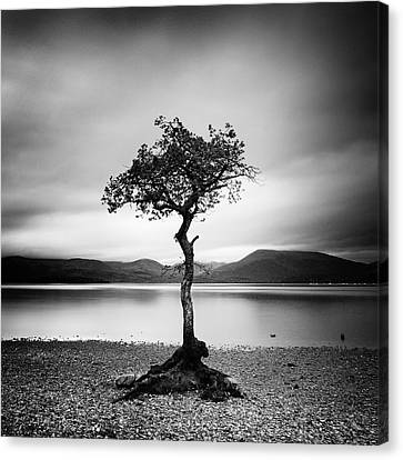 Scotland Canvas Print - Scotland Milarrochy Tree by Nina Papiorek