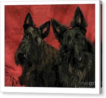 Scottish Dog Canvas Print - Scottish Terrier - Scotties 307 by Larry Matthews