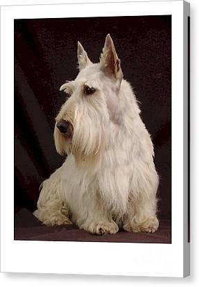 Scottish Dog Canvas Print - Scottish Terrier - Scotty 107 by Larry Matthews