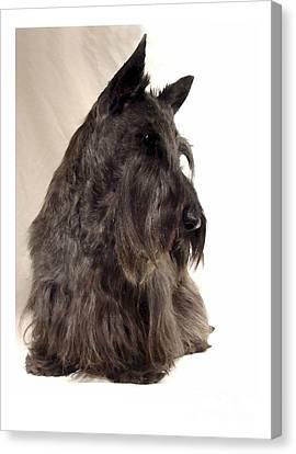 Scottish Dog Canvas Print - Scottish Terrier - Scotty 564 by Larry Matthews