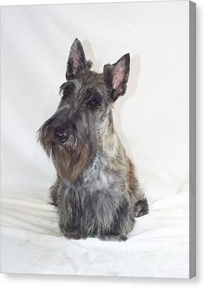 Scottish Dog Canvas Print - Scottish Terrier - Scotty 669 by Larry Matthews