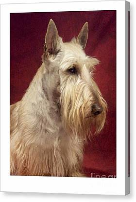Scottish Dog Canvas Print - Scottish Terrier - Scotty 94 by Larry Matthews