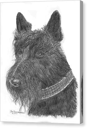 Canvas Print featuring the drawing Scottish Terrier by Jim Hubbard