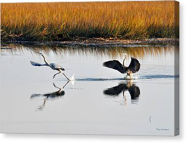 Canvas Print featuring the photograph Scram by Kay Lovingood