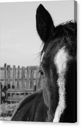 Scratches Canvas Print