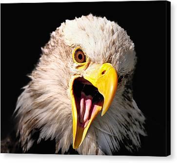 Screaming Eagle II Black Canvas Print