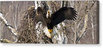 Canvas Print featuring the photograph Screaming Eagle  by Randall Branham