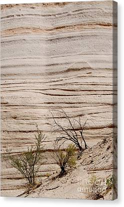 Sculpted By Nature Canvas Print by Vicki Pelham