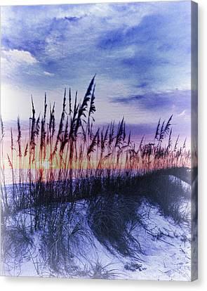 Se Oats 2 Canvas Print by Skip Nall