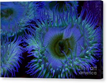 Sea Anemone Canvas Print by Xn Tyler