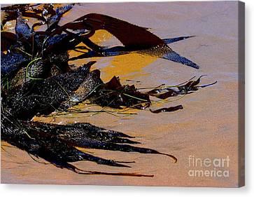 Pismo Beach Sea Drift Canvas Print by Tap On Photo