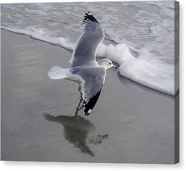 Sea Gull By The Sea Shore Canvas Print by Paulette Thomas