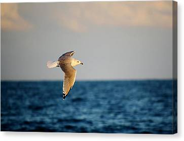 Sea Gull Over The Ocean Canvas Print by Paulette Thomas