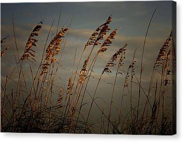 Canvas Print featuring the photograph Sea Oats by Joetta West