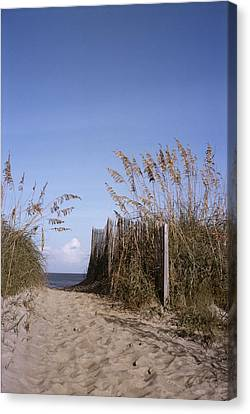 Sea Oats Line The Path Canvas Print by Taylor S. Kennedy