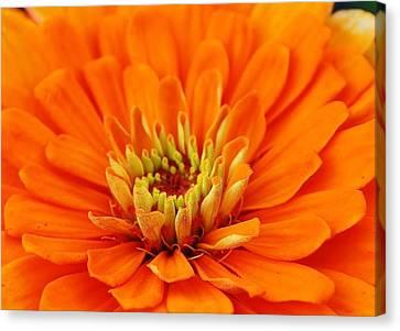 Sea Of Orange Canvas Print
