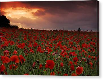 Canvas Print featuring the photograph Sea Of Poppies by John Chivers