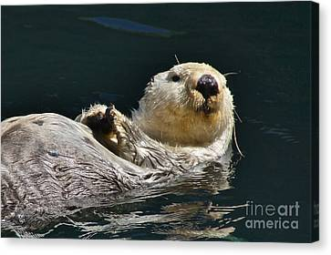 Sea Otter Canvas Print by Sean Griffin