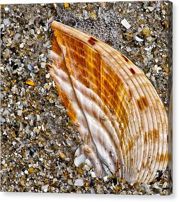 Sea Shell Canvas Print by Nancie Rowan