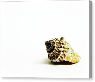 Sea Shell Canvas Print by Weeping Willow Photography