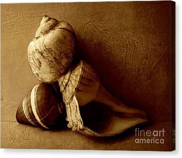 Sea Shells II Sepia Canvas Print by Ann Powell