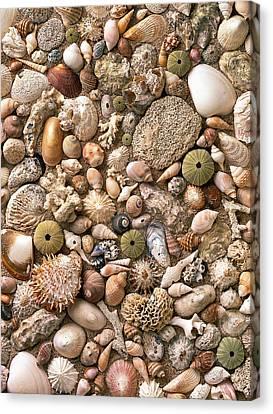 Sea Shells  Canvas Print by Mauro Celotti