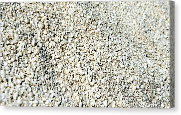 Canvas Print featuring the photograph Sea Shells by Yew Kwang