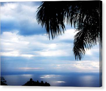 Sea Sky And Palm Tree Canvas Print by Rosvin Des Bouillons