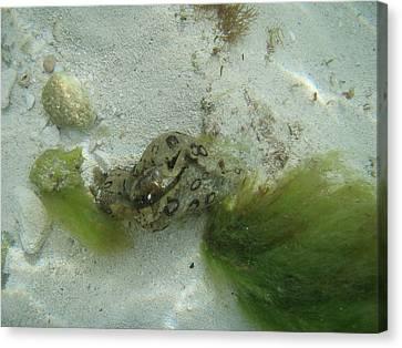 Sea Slug Canvas Print by Kimberly Perry