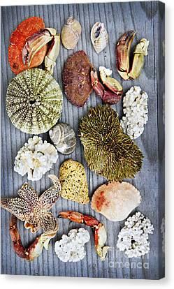 Sea Treasures Canvas Print by Elena Elisseeva