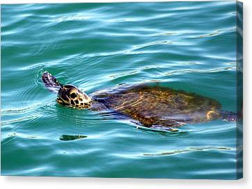 Sea Turtle Canvas Print by Jeanne Andrews