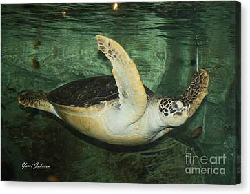 Canvas Print featuring the photograph Sea Tuttle  by Yumi Johnson