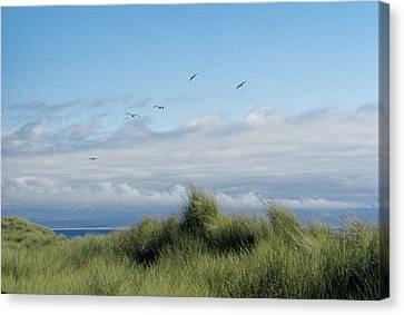 Seabreezes Canvas Print