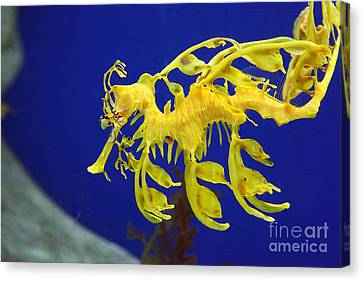 Seadragon Canvas Print