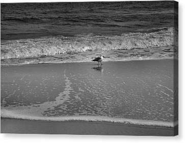 Seagull And Surf Canvas Print by Steven Ainsworth