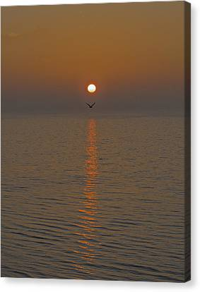 Seagull At First Light Canvas Print by Gary Eason