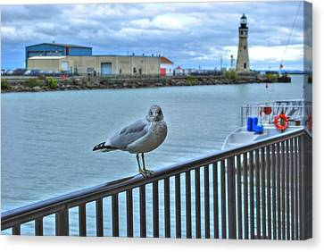 Canvas Print featuring the photograph Seagull At Lighthouse by Michael Frank Jr