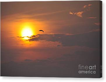 Seagull At Sunset Canvas Print by Fred Fishkin