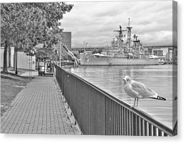 Canvas Print featuring the photograph Seagull At The Naval And Military Park by Michael Frank Jr