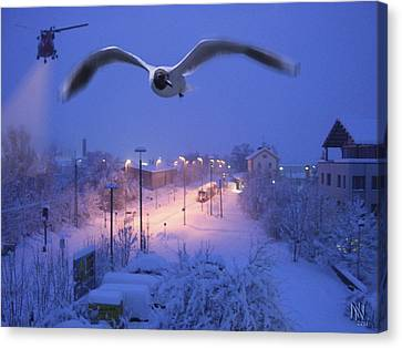 Seagull At Winter Canvas Print by Nafets Nuarb