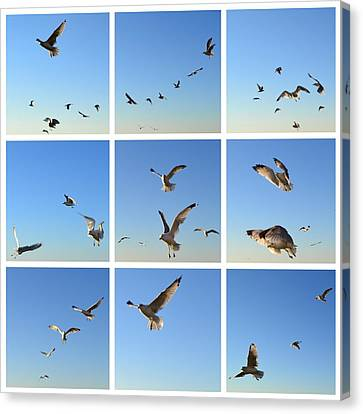 Seagull Collage 2 Canvas Print by Michelle Calkins
